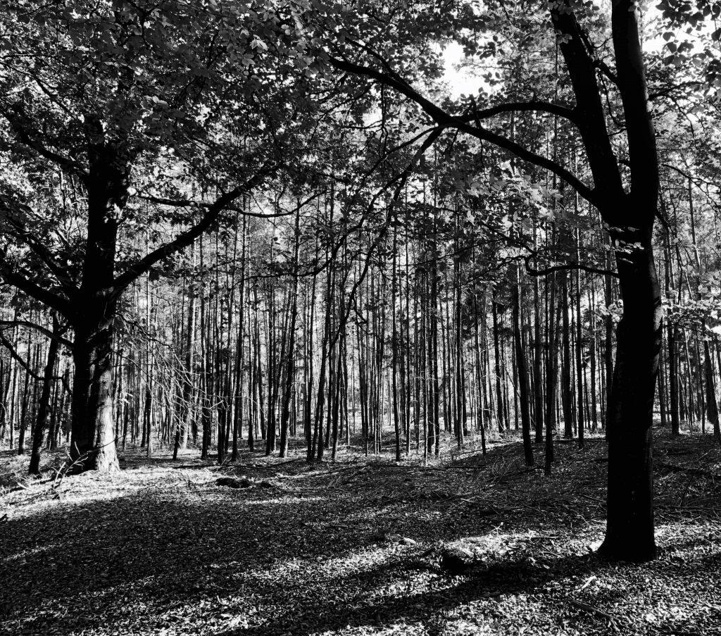 Zwart wit foto bos op Sallandse Heuvelrug National Park